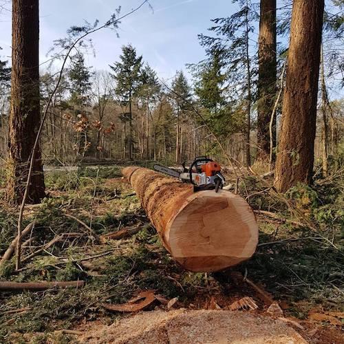 Boomverzorger Bas van Middelaar boomverzorging grondverzet dienstverlening