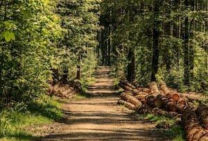 Opdrachten grondverzet boomverzorger Bas van Middelaar boomverzorging en grondverzet